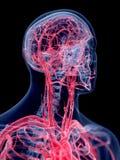 Het menselijke vasculaire systeem stock illustratie