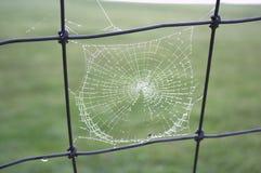 Het met dauw bedekte spinneweb hangt op een omheining Royalty-vrije Stock Foto