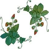Het met de hand gemaakte vignet berries1 van de aardbeiwaterverf vector illustratie