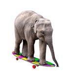 Het met een skateboard rijden van olifant stock fotografie