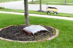 Het met mulch bedekken rond de boomstam van een boom stock afbeelding