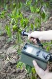Het meten van stralingsniveaus van groene paprika's Stock Foto's