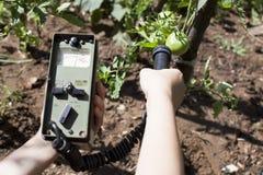 Het meten van stralingsniveaus van groente Stock Foto's