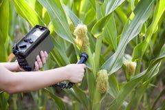 Het meten van stralingsniveaus van maïs stock afbeelding