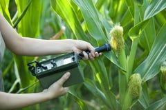Het meten van stralingsniveaus van maïs Stock Foto