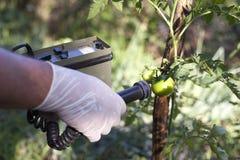 Het meten van stralingsniveaus van tomaat stock afbeeldingen