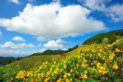 Het Mexicaanse gebied van de zonbloem Stock Foto's