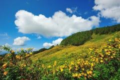 Het Mexicaanse gebied van de zonbloem Stock Afbeelding
