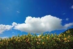 Het Mexicaanse gebied van de zonbloem Stock Foto