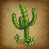 Het Mexicaanse symbool van de cactus Stock Afbeeldingen