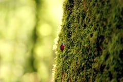 Het micro- leven stock afbeelding