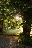 Het middaglicht glanst door bomen in tuin Royalty-vrije Stock Foto's