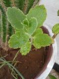 In het midden van cactus stock afbeelding