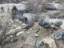 In het midden van woestijn Stock Foto's