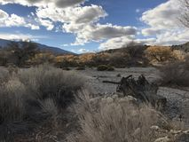 In het midden van woestijn Stock Fotografie