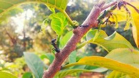 Het mierenleven Royalty-vrije Stock Afbeeldingen