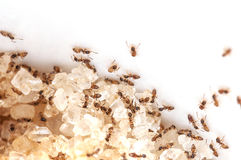 Het mierenwerk Royalty-vrije Stock Foto