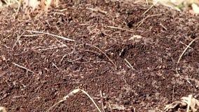 Het mierenwerk als groep in een mierenhoop stock videobeelden