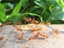 Het mierenwerk stock afbeelding