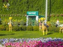 Het Mirakeltuin van Doubai Stock Fotografie