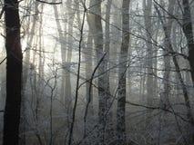 Het mistige bevroren bos in de winter, met bleke zon die door de boom glanzen vertakt zich stock fotografie