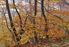 Het mistige Bos van de Herfst Royalty-vrije Stock Foto's