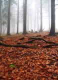 Het mistige bos van de herfst Royalty-vrije Stock Afbeeldingen