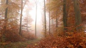 Het mistige bos van de herfst stock videobeelden