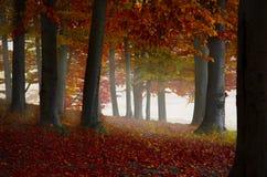 Het mistige bos van de ochtendherfst stock fotografie