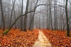 Het mistige landschap van de herfst Royalty-vrije Stock Fotografie