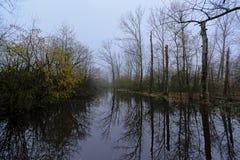 Het mistige landschap van het de wintermoerasland met naakte bomen die in het water nadenken stock foto