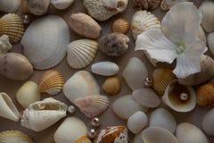 Het model op de achtergrond van overzeese shells als thema heeft, vakantie, brief, prentbriefkaar Stock Fotografie