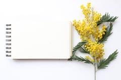 Het Model van de de lentemimosa Postblog sociale media Royalty-vrije Stock Foto's