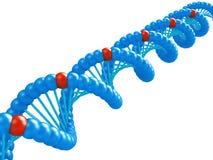 Het model van DNA. Royalty-vrije Stock Afbeeldingen