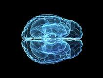 Het Model van hersenen Stock Afbeelding
