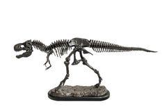 Het model van het het skeletmetaal van dinosaurus tyrannosaurus-Rex royalty-vrije stock afbeeldingen