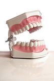 Het model van tanden Stock Afbeelding