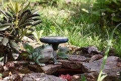 Het modelleren, kikker dichtbij een kleine vijver met stenen op de achtergrond van installaties in de tuin stock afbeeldingen