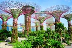 Het moderne park van Singapore Stock Foto