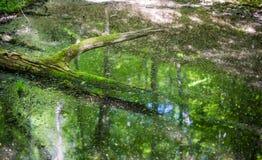 Het moeras in de bos Bemoste boom puilt boven het water uit surfac royalty-vrije stock foto