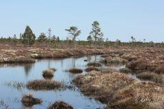 Het moeras in de lente Stock Foto