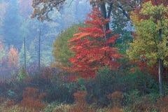 Het Moeras van de herfst Stock Foto