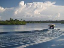 Het moeras van de mangrove Royalty-vrije Stock Foto's
