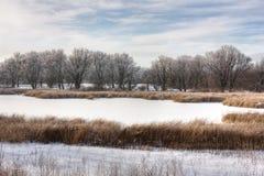 Het moeras van de winter Stock Foto