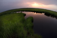 Het moeras van Fisheye Stock Afbeelding