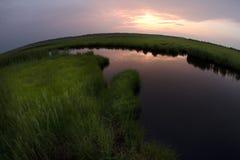 Het moeras van Fisheye Royalty-vrije Stock Foto's
