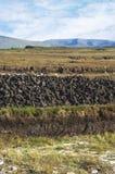 Het moeras van het gras Royalty-vrije Stock Foto
