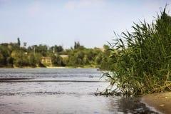 Het moeras van het riviermeer Stock Foto