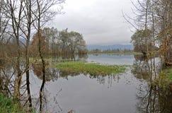 Het moeras van Ljubljana Royalty-vrije Stock Fotografie