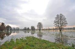 Het moeras van Ljubljana Stock Foto